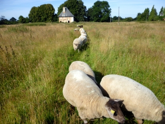 sheepline